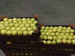Яблоки из Польши! Apples from Poland! - фото 1
