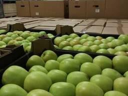 Яблоки из Польши! Apples from Poland! - фото 2