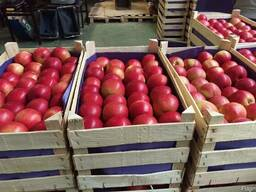 Яблоки из Польши! Apples from Poland! - photo 5
