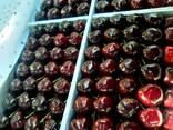 Овощи, фрукты и сухофрукты из Узбекистана - photo 8