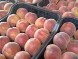 Персики - photo 6
