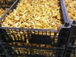 Свежие грибы / Свежие ягоды