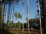 Участок на видземском каменистом взморье под поселок - photo 7
