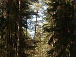 Участок в устье р. Витрупе в ландшафтном парке - photo 6